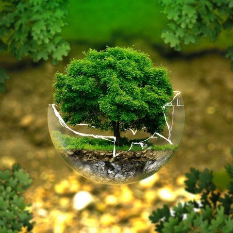Tree in a jar